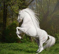 Elegance White https://www.pinterest.com/alzirasalvador/