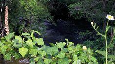 A pleasant walk through the woods down to the river Seia, where you find the old Roman bridge and nature at its best! #rioseia #fiaisdabeira #romanbridge #umpaisdentrodopais #visitportugal (at Fiais da Beira)
