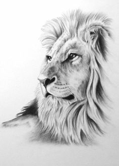 """Charcoal Drawing, 8 """"x ORIGINAL Lion Art, Lion Drawing, Lion Sketch, Charcoal - diy tattoo images - tattoos Pencil Drawing Tutorials, Pencil Drawings, Drawing Ideas, Drawing Tips, Sketch Ideas, Pencil Art, Lion Sketch, Cat Sketch, African Cats"""