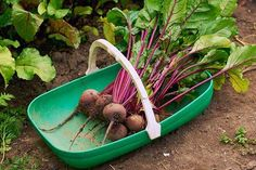 How to prep Whats In Season, Tis The Season, In Season Produce, Bbc Good Food Recipes, Root Vegetables, Folic Acid, Eating Raw, Beetroot, Vegetable Dishes