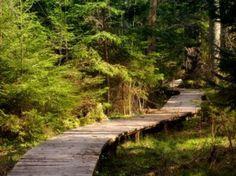 Sendero en el bosque Foto Gratis