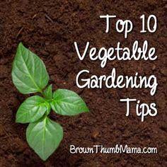 Vegetable Gardening Tips: BrownThumbMama.com