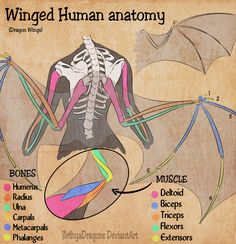 52 Ideas for bird wings drawing tutorial Drawing Reference Poses, Anatomy Reference, Drawing Poses, Drawing Tips, Drawing Tutorials, Art Tutorials, Painting Tutorials, Hand Reference, Drawing Drawing