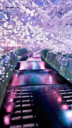 Check out this awesome collection of Japan Cherry Blossom Tree wallpapers, with 48 Japan Cherry Blossom Tree wallpaper pictures for your desktop, phone or tablet. Nature Wallpaper, Wallpaper Backgrounds, Scenic Wallpaper, Colorful Wallpaper, Leaves Wallpaper, Tree Wallpaper, Mobile Wallpaper, Cherry Blossom Japan, Cherry Blossoms