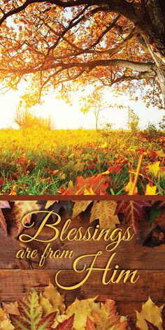 Thanksgiving Blessings, Thanksgiving Greetings, Thanksgiving Quotes, Thanksgiving Decorations, Thanksgiving Iphone Wallpaper, Harvest Day, Everyday Prayers, Church Banners