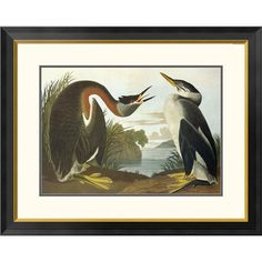 Red Necked Grebe By John James Audubon, 25 X 32-Inch Wall Art