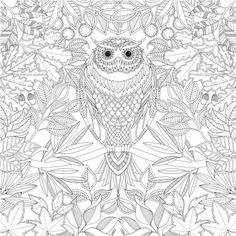 coloriage-adulte-anti-stress-hibou.jpg (500×500)