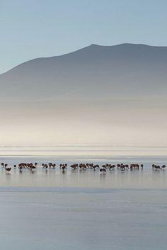 salt flats  Salar de Uyuni (9) | Flickr - Photo Sharing!