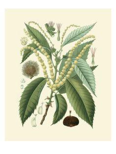 Botanical Glory II