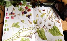Botanical Art Online with Dianne Sutherland, botanical art courses