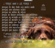 Porque amar a los perros, porque lo dan todo sin pedir nada, porque ….