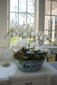 .ORCHIDS FOR THE HOUSE