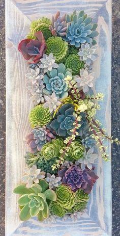 Dieses Angebot ist für einen Blumentopf in dieser Größe bestellen und Farbe zu färben. Hängende Hardware installiert. 2-3 Wochen in Anspruch nimmt. Sorte wird je nach Verfügbarkeit variieren. Das Bild ist ein Beispiel für Gärten, die in dieser Größe hergestellt. Farbe: #succulentplanter #gardenideas #garden Succulents In Containers, Cacti And Succulents, Planting Succulents, Planting Flowers, Cactus Planters, Growing Succulents, Container Flowers, Container Plants, Planter Pots