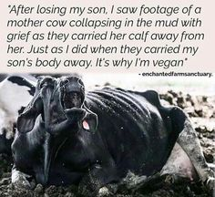 Animal rights activism · Animal Rights Activism · Defend Animals [Page Why Vegan, Vegan Vegetarian, Reasons To Go Vegan, Vegan Facts, Vegan Quotes, Stop Animal Cruelty, Vegan Animals, Animal Welfare, Vegan Lifestyle
