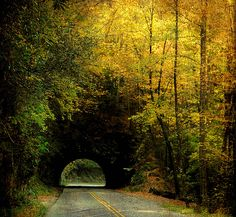 Great Smoky Mountains, Tennessee <3
