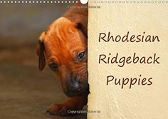 Rhodesian Ridgeback Puppies A monthly calendar with photographs of Rhodesian Ridgeback puppies. Rhodesian Ridgeback Puppies, Photo Calendar, Landscape, Pets, Animals, Products, A3, Photographs, English