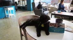 Cat Cafe Mania - Eater Boston