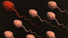Sperm Check: Understanding the Semen Analysis For Fertility