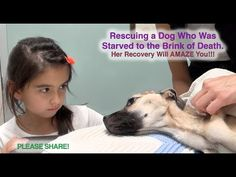 She Stares Into The Eyes Of A Dying Dog. Seconds Later? A Miracle...