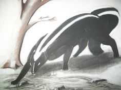 Aniwye- Native American legend: a giant skunk that killed people by farting at them. It would then eat the body. It was defeated by a hero and turned into a regular sized skunk.