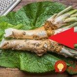 Archívy Zdravie - Page 2 of 182 - To je nápad! Asparagus, Vegetables, Food, Studs, Essen, Vegetable Recipes, Meals, Yemek, Veggies