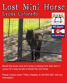 #COFlood Lost #Horses Brown mini horse is missing from Lyons CO.. it may be with a blonde filly Please share #COPets