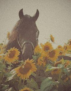 Most Beautiful Horses, Animals Beautiful, Cute Animals, Cute Horses, Pretty Horses, Horse Photos, Horse Pictures, Horse Wallpaper, Iphone Wallpaper