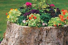 How to: Tree-Stump Planter. I think I need to do this with the huge tree stump in my backyard! Tree Stump Planter, Log Planter, Planter Garden, Tree Planters, Succulent Planters, Wooden Planters, Hanging Planters, Succulents Garden, Cactus Plants