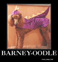 Poodle in Barney costume