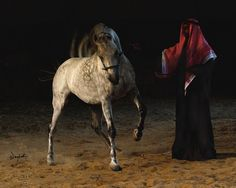 The link between Bedu and horse is as strong as any in the world