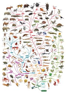 Please find more details about Charles Darwin , the Scientist behind the Theory of Evolution, here and his tree of life here , more her.