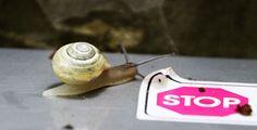 Snail Trails are Rides around Brisbane, southeast Queensland, Australia.
