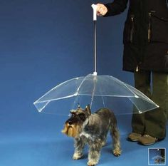rainy day walk...no problem...The Dogbrella