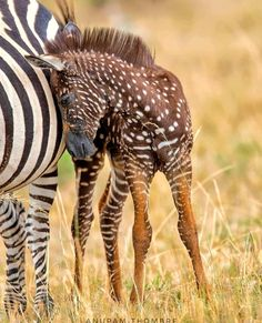 Most Beautiful Animals, Unusual Animals, Rare Animals, Cute Baby Animals, Funny Animals, Wild Creatures, Cute Creatures, Melanism, Tier Fotos