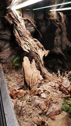 Tarantula Enclosure, Snake Enclosure, Reptile Habitat, Reptile Room, Tropical Freshwater Fish, Freshwater Aquarium Fish, Snake Terrarium, Tanked Aquariums, Geckos