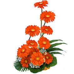 Send your flowers and gift to family and friends in three straightforward steps. Choose a Flower between a wide selection of product choices for gifts and have your message delivered.