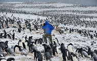 Mark Smith, cameraman, filming penguins  at Cape Crozier Antaritica...Not sure which is more heroic...Mark or the penguins