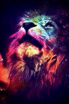 Lion colourful iPhone background wallpaper