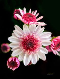 Beautiful Flower Photography for Your Inspiration