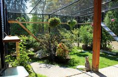 Don't call it a cage. It's a catio. - Frances Lee Slade - Don't call it a cage. It's a catio. To keep cats and birds safe, more people are constructing elaborate and screened outdoor areas for the family feline. Send us a photo.