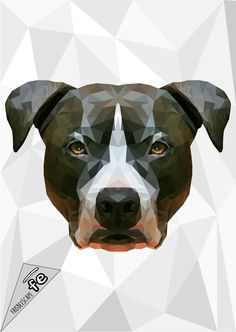 The graphic department of FrisbeEscape has realized these artworks for show his power. The images represent only the sample of possible creation. Contact us for more information at info@frisbeescape... Stay tuned. #dog #discdog #disc #frisbee #flydog #kelpie #kelpies #playdog #mascotas #perro #cane #juegos #gioco
