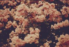 vintage flowers photography - Pesquisa Google