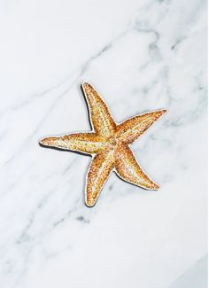 No other sea creature looks exactly like a celestial body quite like the exotic starfish does. #windowfilmworld #windowfilm #screendoorsavermagnet #homedecor Film World, Screen Material, Sun And Stars, Window Film, Sea Creatures, Starfish, Magnets, Doors, Exotic