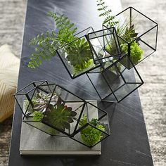 House your succulents, ferns and small flowers in our modern Cube Terrarium. Containers clustered together make assembling and designing your greenery quick and easy.