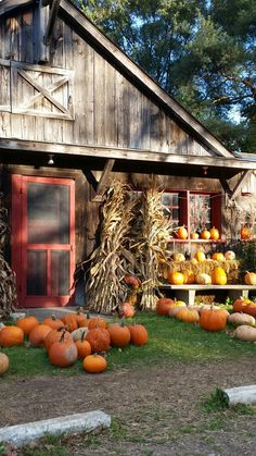 Pumpkin Farm, Diy Pumpkin, Autumn Scenery, Farm Barn, Autumn Aesthetic, Girl Day, Autumn Inspiration, Fall Pumpkins, Fall Decor