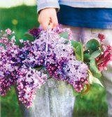 Revistă săptămânală - Formula AS Romania, Plants, Flora, Plant