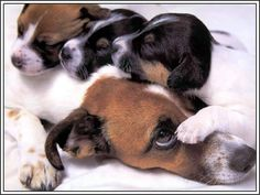Pack of 4 Dogs Puppy Puppies Jack Russell Terrier Greeting Notecards/ Envelopes…