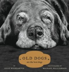 Not sure this is a Lab, but I love the look and what it says! Old dogs are the best!
