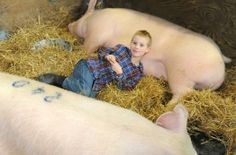 Brothers say 'cheese' with their Farm Show pigs. Love!