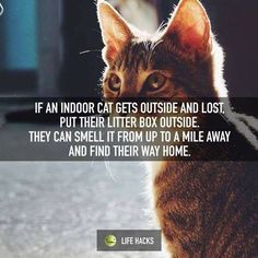 finding a lost indoor cat #catsdiyapartments